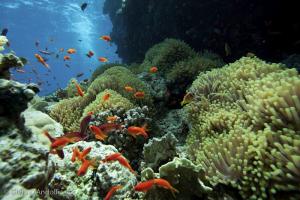 egypte-2011-3