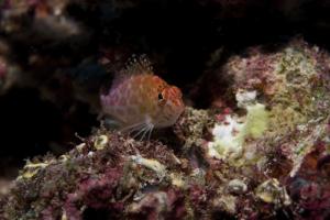maldiven2009-1_0