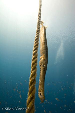 onderwater-12