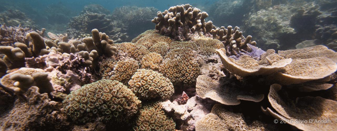 Lombok 2015